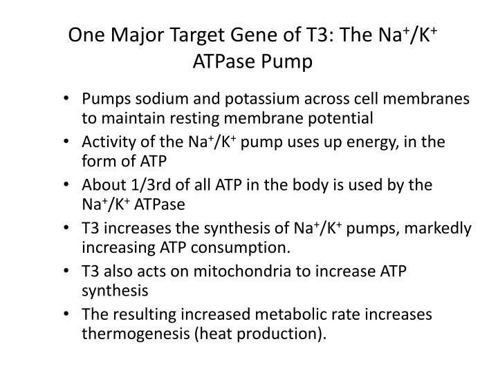 One Major Target Gene of T3: The Na