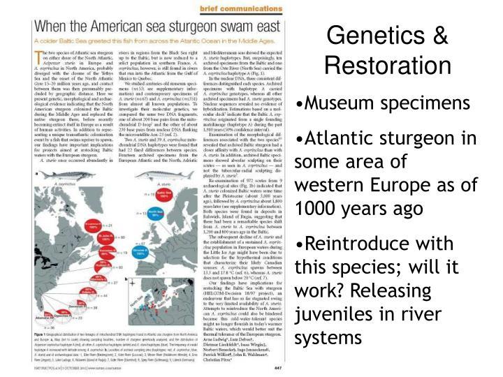 Genetics & Restoration