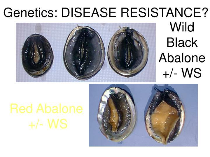 Genetics: DISEASE RESISTANCE?