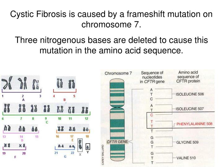 Cystic Fibrosis is caused by a frameshift mutation on chromosome 7.
