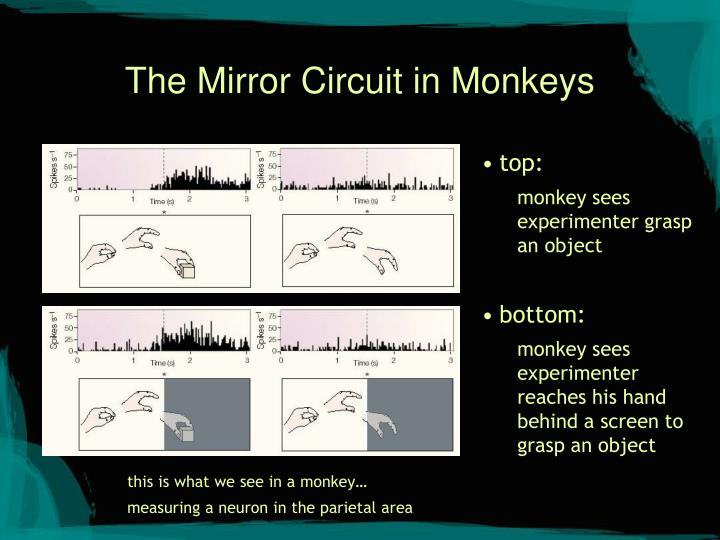 The Mirror Circuit in Monkeys
