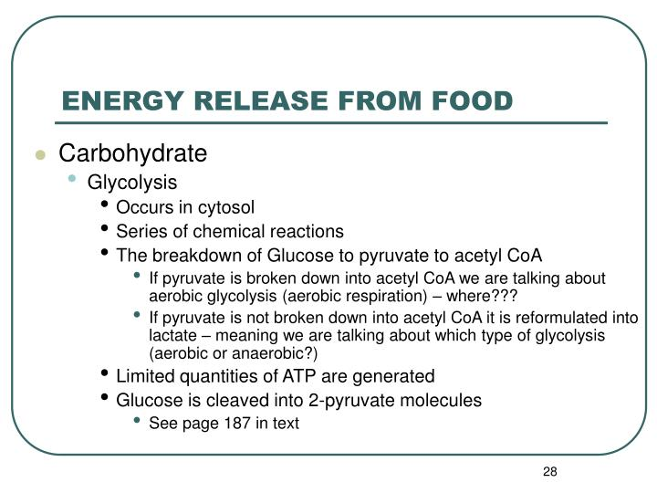 ENERGY RELEASE FROM FOOD
