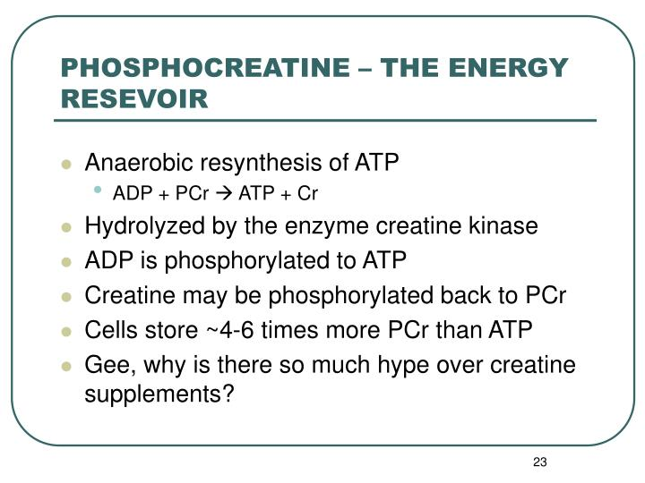 PHOSPHOCREATINE – THE ENERGY RESEVOIR