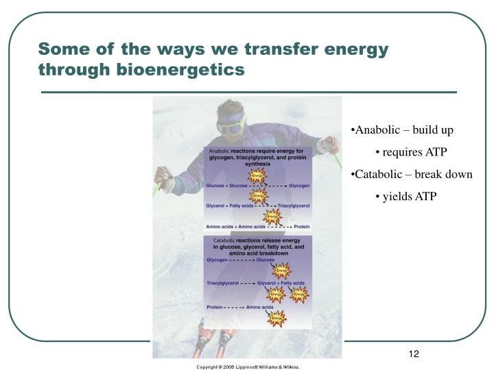 Some of the ways we transfer energy through bioenergetics