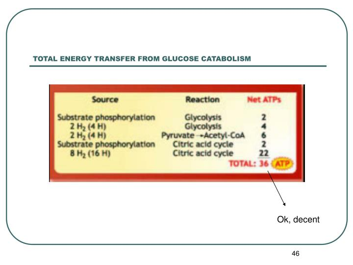TOTAL ENERGY TRANSFER FROM GLUCOSE CATABOLISM