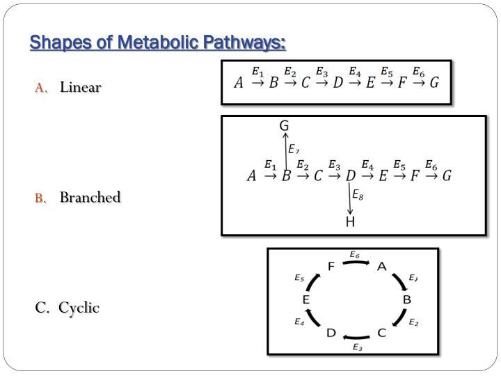 Shapes of Metabolic Pathways: