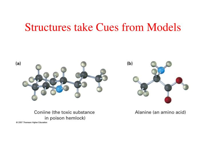 Structures take Cues from Models