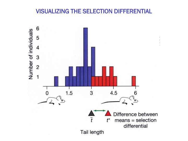 VISUALIZING THE SELECTION DIFFERENTIAL