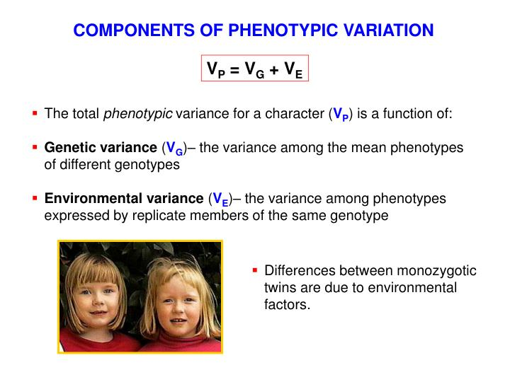 COMPONENTS OF PHENOTYPIC VARIATION