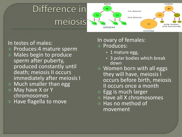 Difference in meiosis