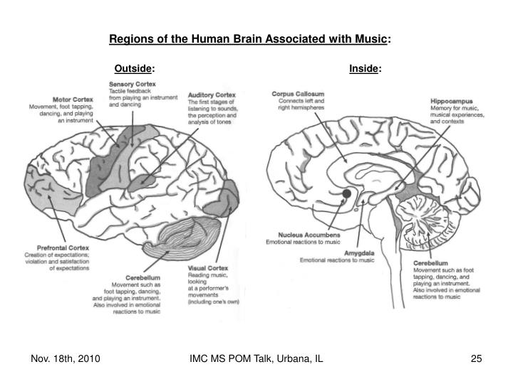 Regions of the Human Brain Associated with Music