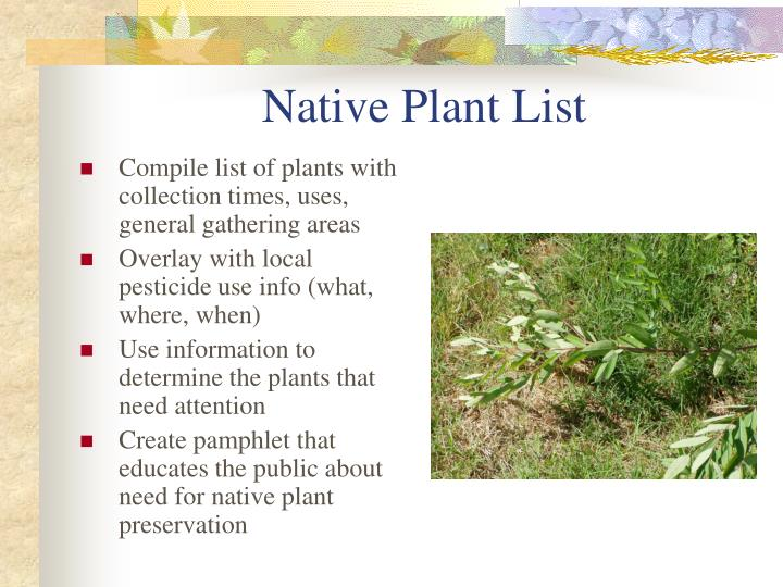 Native Plant List