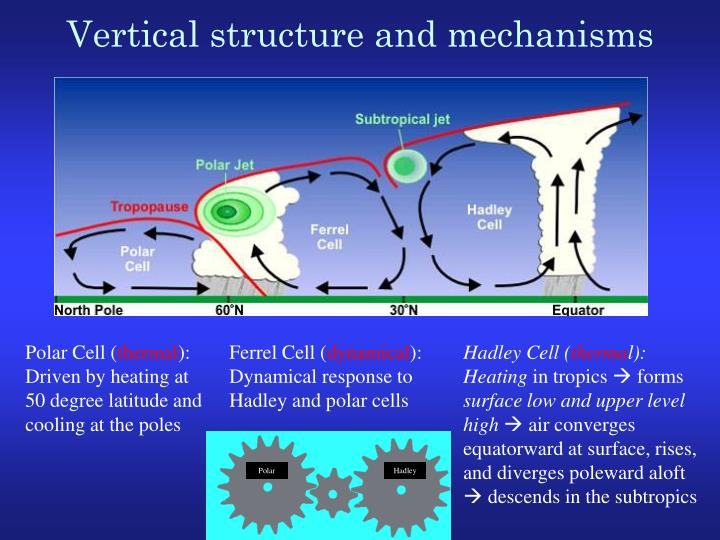 Vertical structure and mechanisms