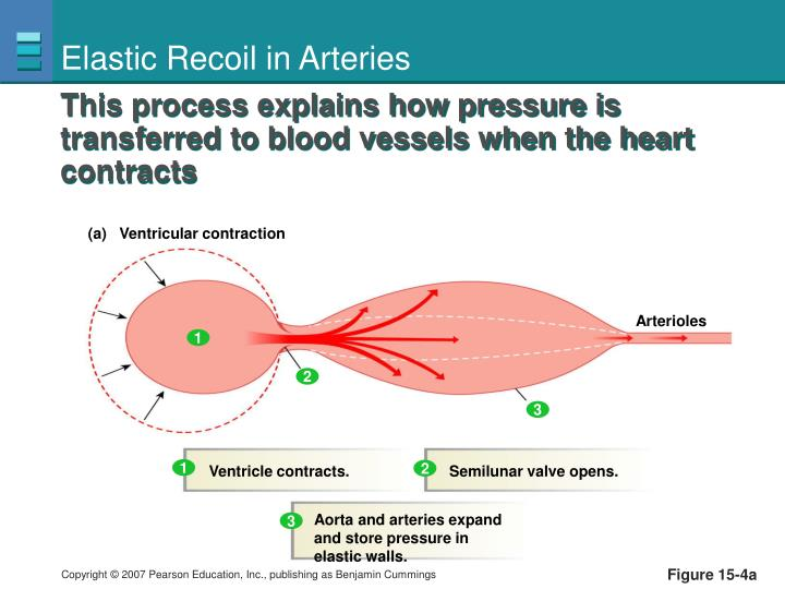 Elastic Recoil in Arteries