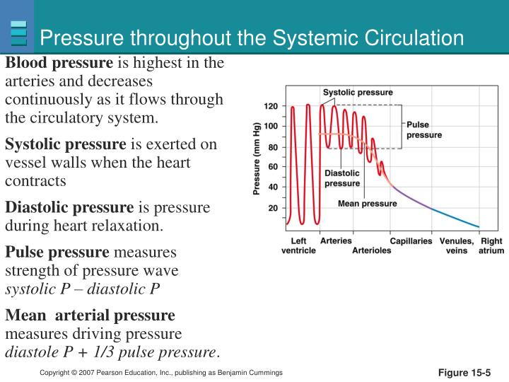 Pressure throughout the Systemic Circulation