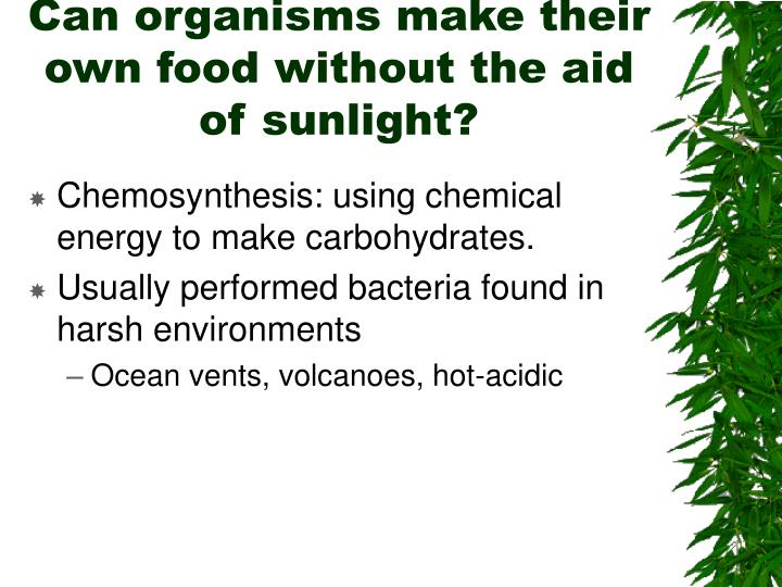 Can organisms make their own food without the aid of sunlight?