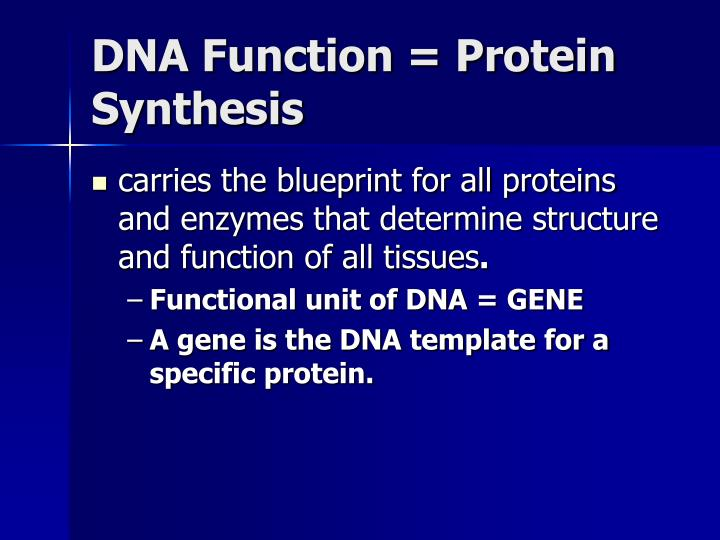 DNA Function = Protein Synthesis