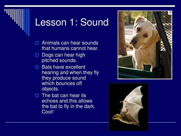 Animals can hear sounds that humans cannot hear.