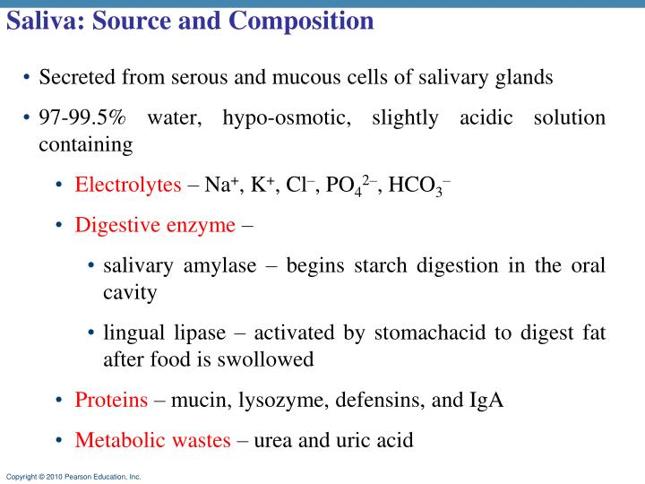 Saliva: Source and Composition