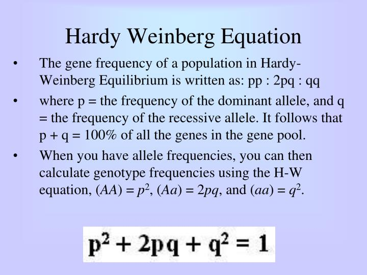 Hardy Weinberg Equation