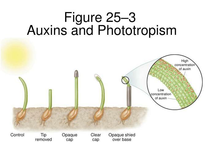 Figure 25–3