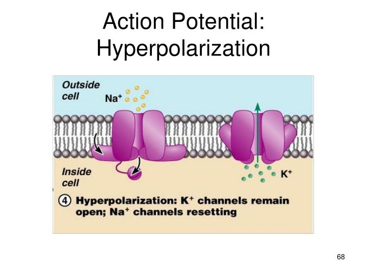 Action Potential: Hyperpolarization