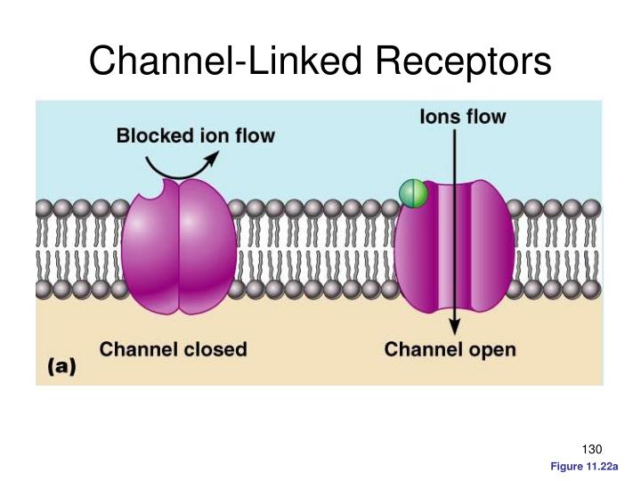 Channel-Linked Receptors