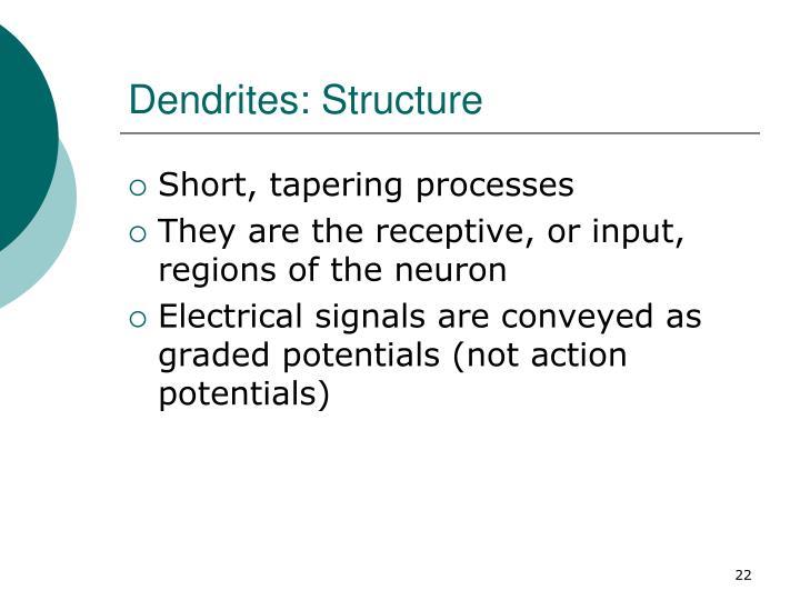 Dendrites: Structure