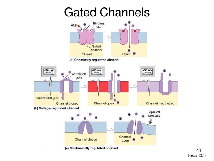 Gated Channels