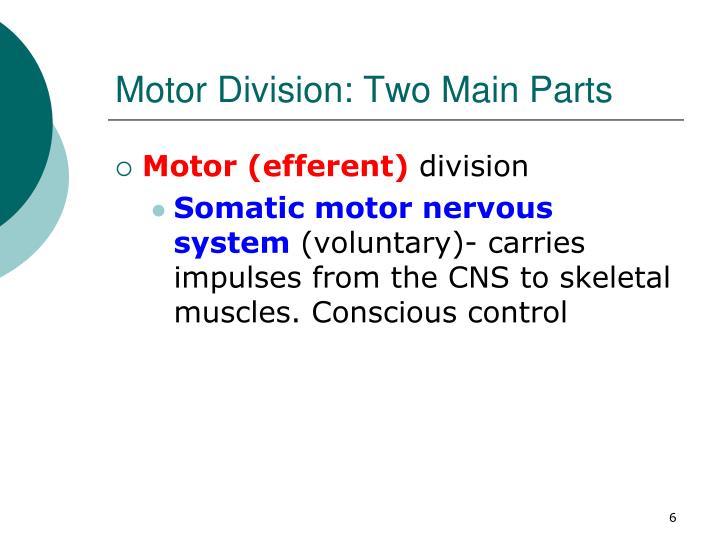Motor Division: Two Main Parts