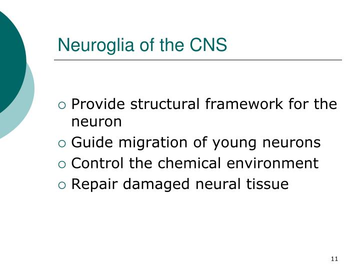 Neuroglia of the CNS