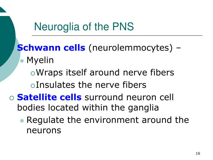 Neuroglia of the PNS