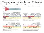 propagation of an action potential along an unmyelinated axon