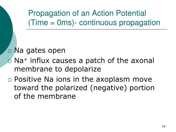 Propagation of an Action Potential