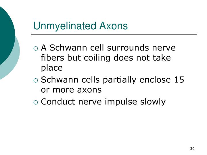 Unmyelinated Axons