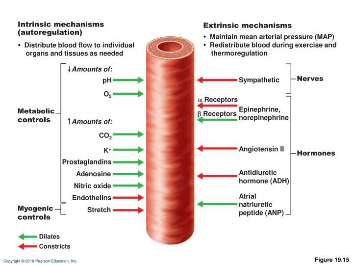 Intrinsic mechanisms