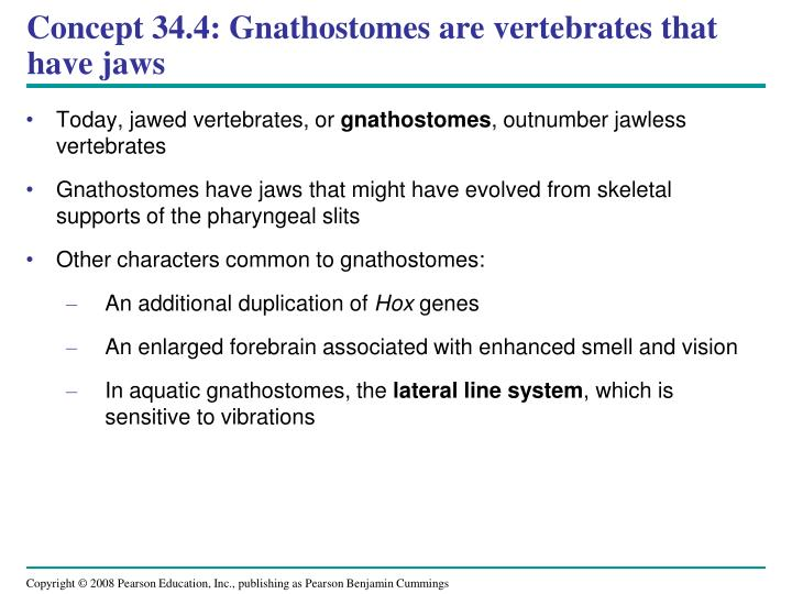 Concept 34.4: Gnathostomes are vertebrates that have jaws
