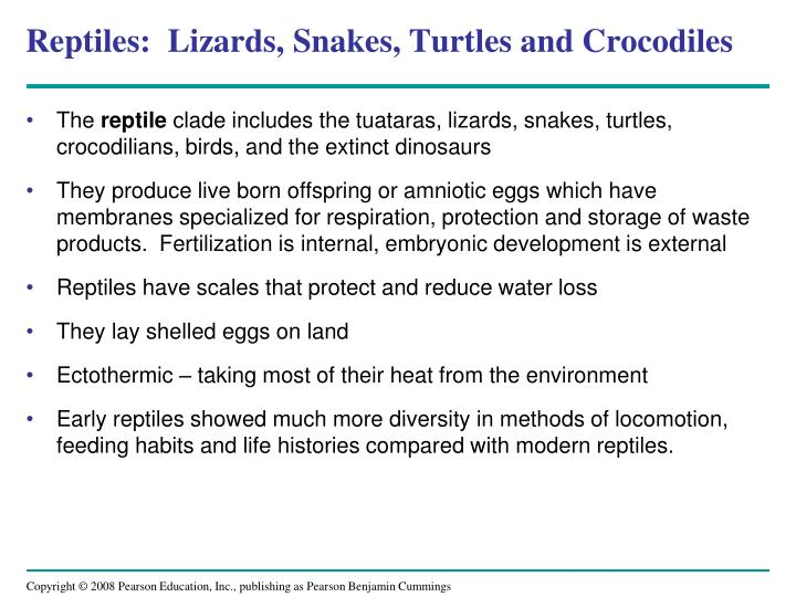 Reptiles:  Lizards, Snakes, Turtles and Crocodiles