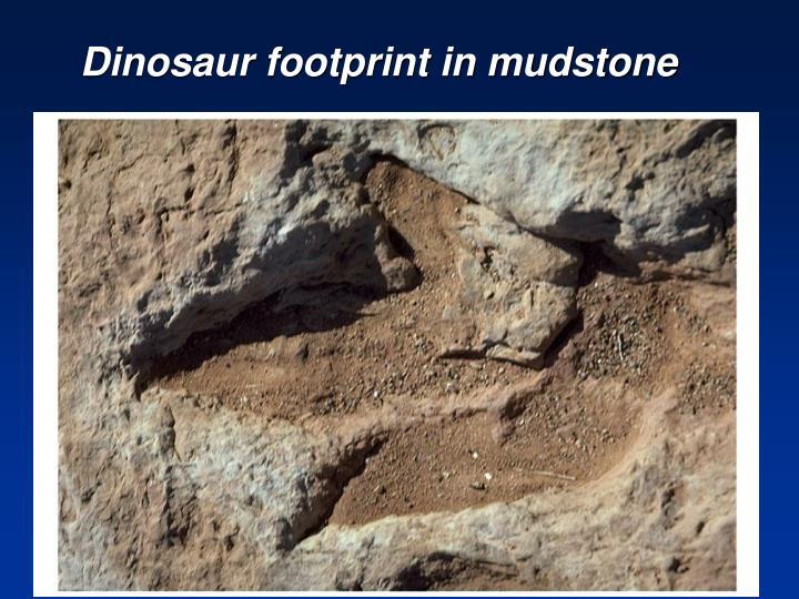Dinosaur footprint in mudstone