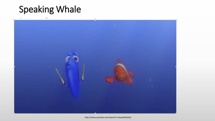 Speaking Whale