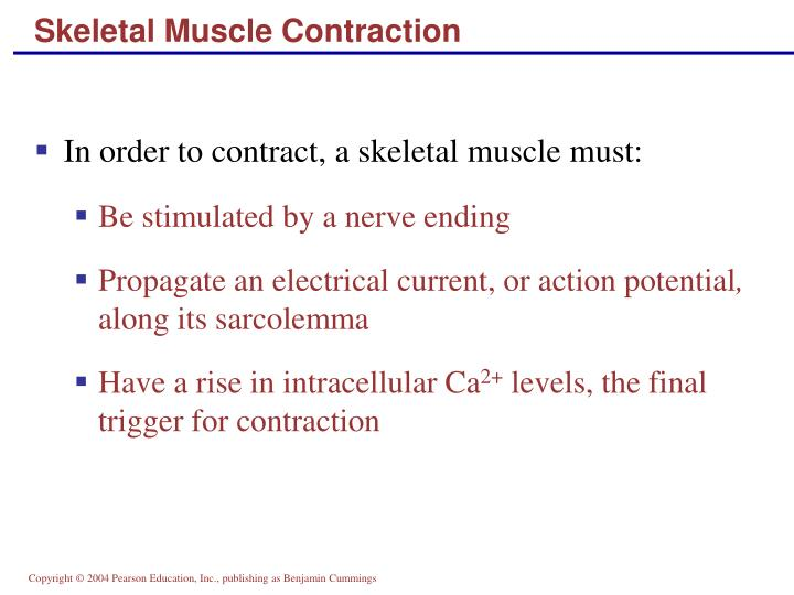 Skeletal Muscle Contraction