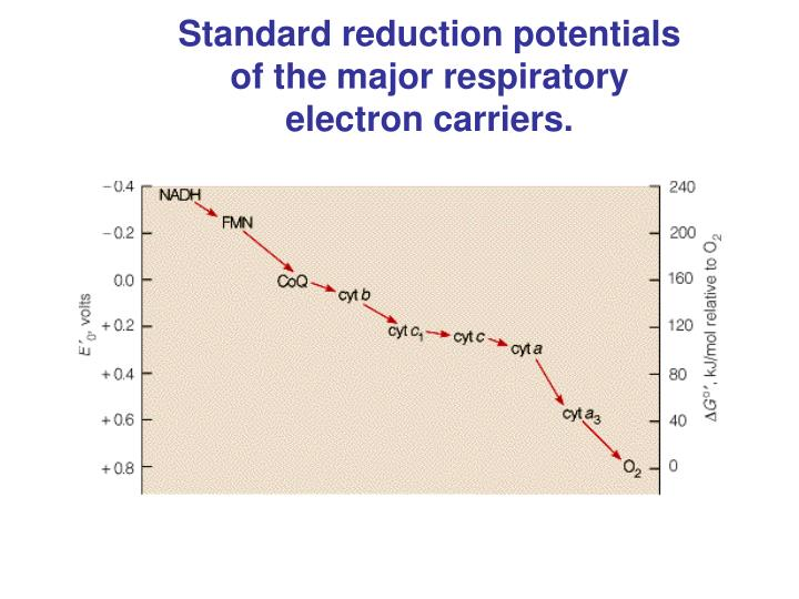 Standard reduction potentials of the major respiratory electron carriers.