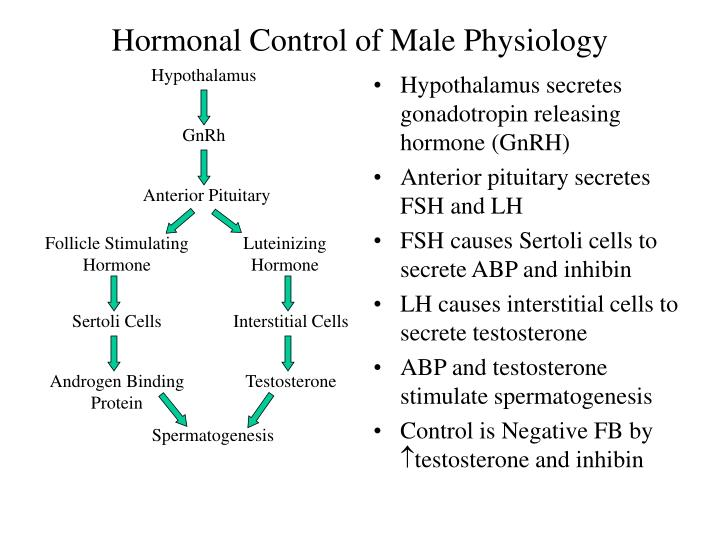 Hormonal Control of Male Physiology