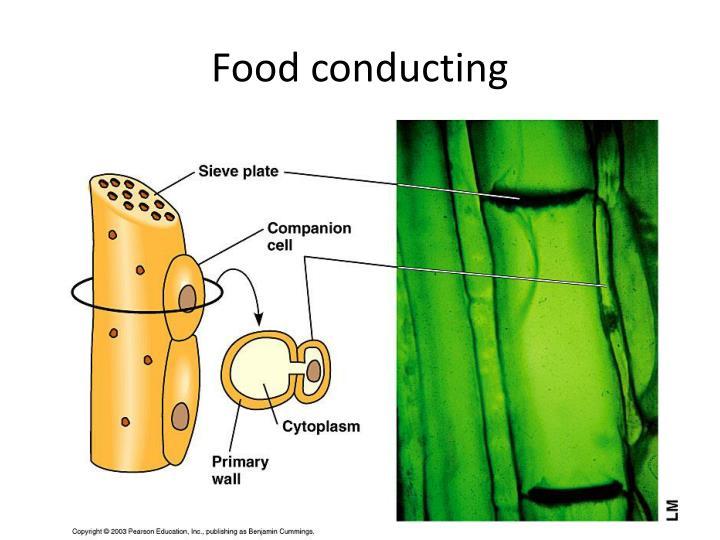 Food conducting