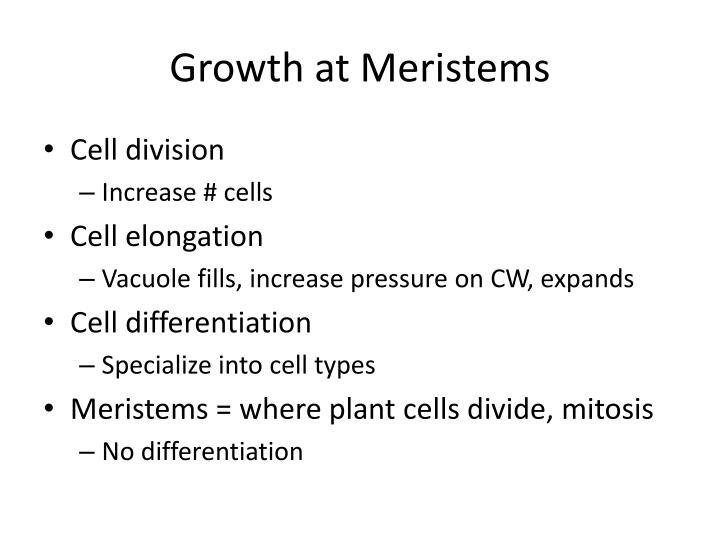 Growth at Meristems