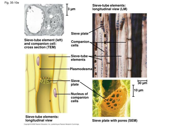 Fig. 35-10e