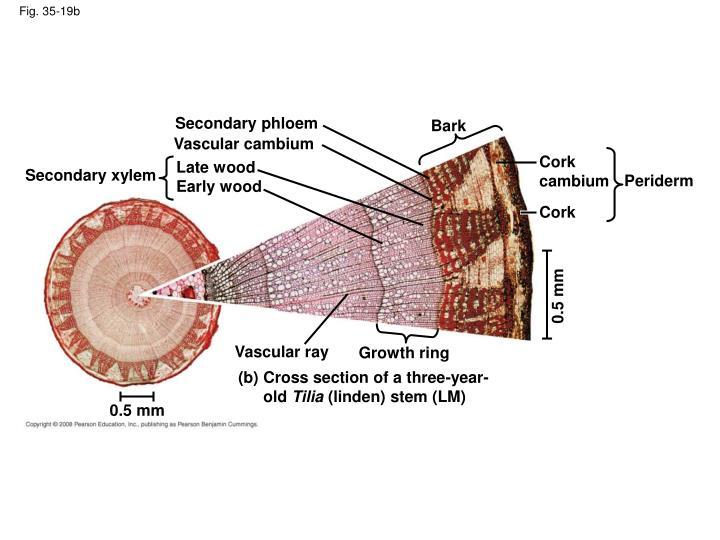 Fig. 35-19b