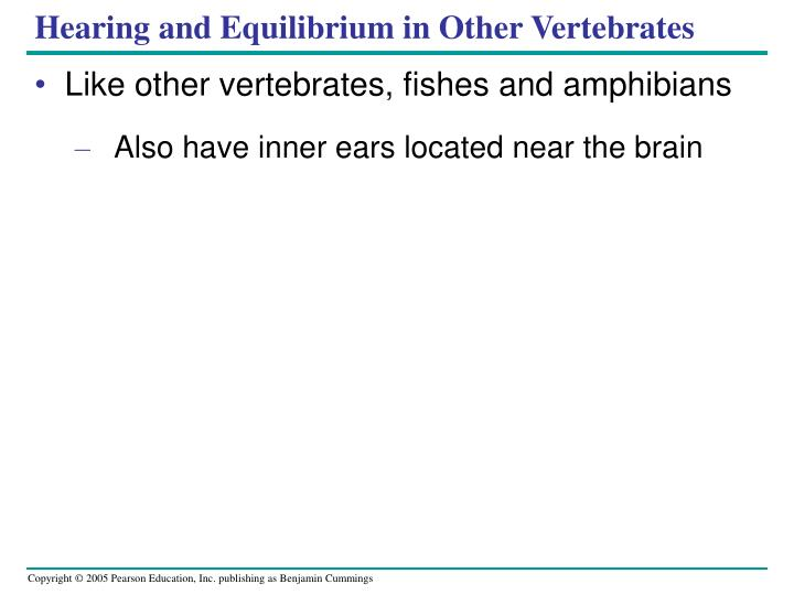 Hearing and Equilibrium in Other Vertebrates