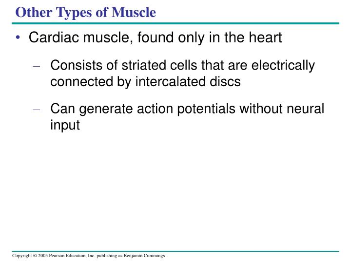 Other Types of Muscle