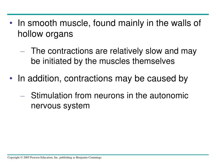 In smooth muscle, found mainly in the walls of hollow organs